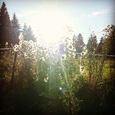 Fluffy Flowers -Finland