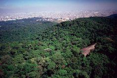 Projeto aprovado na Assembleia de SP prevê privatização de 25 parques; entenda