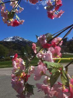 Springtime,  Kinsarvik Norway