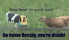 Go home Bessie, you're drunk!