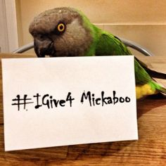 #IGive4 (with images, tweets) · GuideStar · Storify