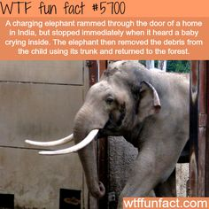 Another reason why elephants are the best animals - WTF fun fact