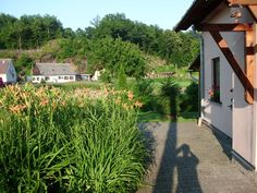 Před domem Plants, Plant, Planets