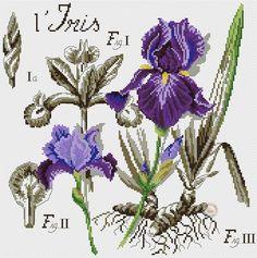 Etude Botantique - Iris This pattern is in Dropbox. Cross Stitch Love, Cross Stitch Samplers, Cross Stitch Flowers, Cross Stitch Charts, Cross Stitching, Cross Stitch Embroidery, Embroidery Patterns, Cross Stitch Patterns, Iris Flowers