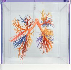 Full Color Printed Cadavers Aid Medical Learning Without the Red Tape Biology Projects, 3d Printer Projects, Digital Fabrication, Impression 3d, 3 D, Digital Prints, 3d Printing, Medical, Diy Crafts