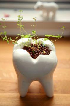 Un vaso da fiori che tutti gli #odontoiatri vorrebbero avere. ;) Troppo divertente ;) #odontoiatria #vaso #pianta #fiori #dente