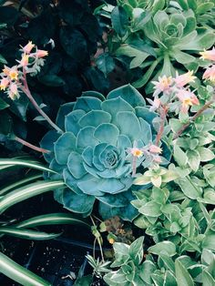I finally learned that, as long as I have good drainage, I can plant my succulents in among my other plants. (A lot of nice succulents gave their lives until I learned that...) ~~ Houston Green Gardeners