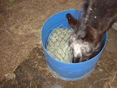 Barrel slow hay feeder idea