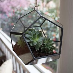 Geometric hanging terrariums are perfect for any living space!