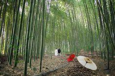 大覚寺(京都) | フォトギャラリー - PHOTOGRAPHY | elle pupa