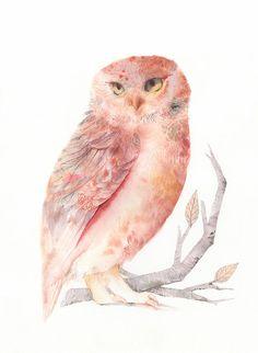 Pink and Salmon Owl 8 1/2 x 11 Archival Print door amberalexander