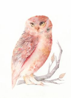 'Pink and Salmon Owl' by Amber Alexander