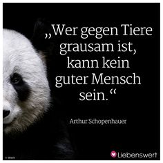 Anyone who is cruel to animals can not be a good person. ♦ Arthur Schopenhauer ♦ That's it . Vegan Quotes, True Love Quotes, Happy Animals, Be A Better Person, Wise Words, About Me Blog, Humor, Sayings, Pets
