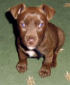 patterdale terrier puppies for sale | Pin Patterdale Terrier Puppies For Sale on Pinterest