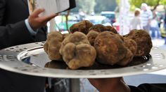 n the  heart of the Motovun forest, one of the most important areas for harvesting the white truffle in Istria, Zigante Tartufi Days are being held each year.    This long manifestation is being held over seven weeks during autumn (from the first week in October to mid-November).