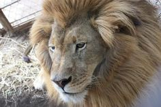 Riverside Wildlife Center near Meramec caverns - We offer a hands-on, up close and personal guided tour