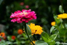 写真 赤い花 202001 もう8月になるね My Works, Plants, Flora, Plant