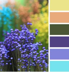 from Design SeedsThose of us wholove color (me! me!) can't resist the urge to include all the hues on the color wheel in our gardens.Jan Johnsen - colorful flower gardenColor does add a dramatic punch to a gardenbut it can result in visual cacophony (aka : a colorful mess).