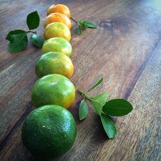 Mandarinas de la Sierra