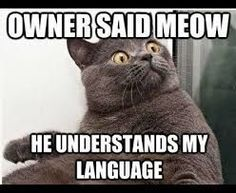 27 Kitten MemesTap the link to check out great cat products we have for your little feline friend!