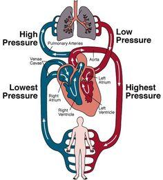 Combat Congestive Heart Failure