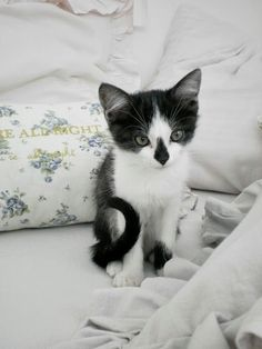 ...by Vicky I used to have this kitty. His name was Butch. Had him for 17 years <3