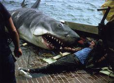 Quint e o tubarão, grandes amigos.