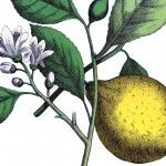 You searched for botanical - The Graphics Fairy