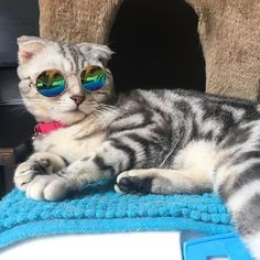 Cool cat with glasses!    LumiParty Fashion Cool Cat Glasses Pet Dog Eye Protection Sunglasses Puppy Kitty Photo Props Toy-30