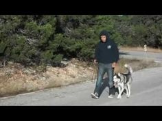 Five Key Principles of Training a Husky | PetHelpful