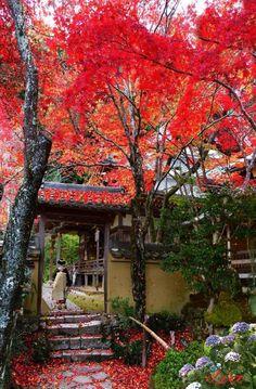 """Templo de Shoji-ji , """"Templo de las flores"""" .Fundado en el año 680, hay plantados unos 100 cerezos que tiñen de color el templo, Kyoto"""