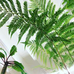 Boomvaren en Madagascar