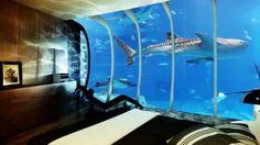 chambre d'hotel de luxe sous-marine a vimeo avec requin dans l'eau