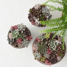 A little in love with the shades of these baby succulents being shot in the studio today.