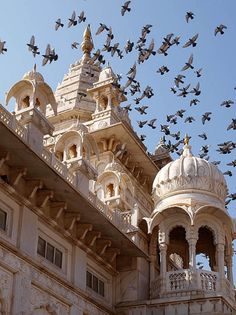 Pigeons above Jaswant Thada Palace in Jodhpur, India (by Jenny Mackness).