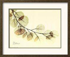 Sage Eucalyptus Leaves II Art Print by Albert Koetsier at Art.com