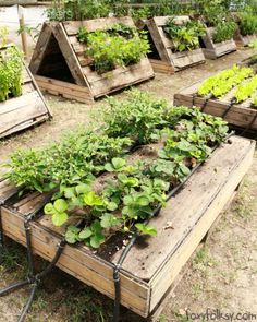 #Pallet, #Planter, #RaisedGardenBeds Look what FoxyFolksy found in our recent trip to Ca'Savio, Italy... A pallet garden, but this one is one of the most interesting we have ever seen! Organized, creative, with automatic watering system!  Who said you need a  garden or ground to