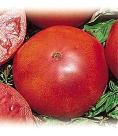 Red Brandywine Tomato 65 Seeds - Heirloom!