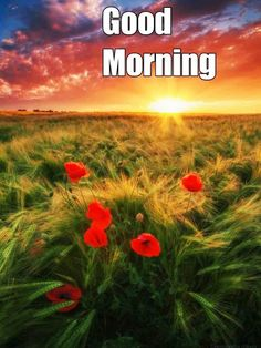 Free Good Morning Images, Good Morning Picture, Morning Pictures, Good Morning Greetings, Good Morning Wishes, Good Morning Coffee Gif, Good Morning Wallpaper, Divine Light, Happy Sunday