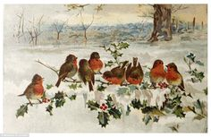 Christmassy scene: Victorian Christmas card showing a colourful group of robins on a holly bush branch
