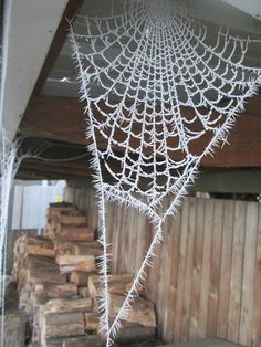 I don't like spiders but this is really neat looking!  It's a spiderweb with heavy frost.