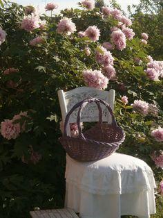 hobbyshabbyshock- allestimento primaverile con i fiori di stagione: le peonie