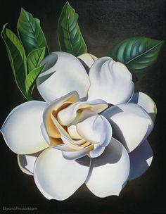 The Sweet Smell of Home - Gardenia, Kona, Hawaii - Dyana Hesson Gardenias, White Flowers, Beautiful Flowers, Friends Are Like, Beautiful Islands, Flower Art, Flower Power, Oil On Canvas, Art Projects