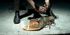 STOP!!! cet homme torture des animaux en public, sous prétexte d'ART!!! Centre Dramatique National de Montpellier, Monsieur le Maire de Montpellier:Annulez le spectacle de Rodrigo Garcia