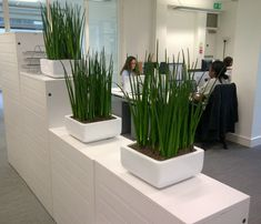 Reduce stress and increase productivity in the workplace by adding plants? Yes! #biophilia http://plantsolutions.com/