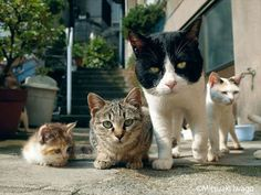 Variety......the cats of life, love and cuteness...... in small, medium  large.
