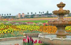 Carslad flower fields picture pavilion