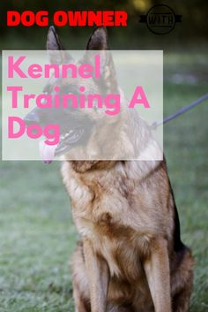 Kennel Training A Dog Advice You Mustn't Skip Over >>> Be sure to check out this helpful article. Kennel Training A Dog, Crate Training, Dog Training Tips, Stress And Anxiety, Dog Owners, Crates, Your Pet, Stuff To Do, Have Fun