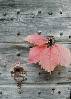 Old wood from Elisabeth §♥