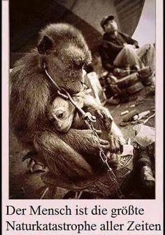 """Ein Mensch, angekettet...für mich egal. Denn er hat Hände,einen Mund...er kann sich VERSTÄNDIGEN, so das andere Menschen sie verstehen ,Beine. ER hat wesentlich mehr Chancen aus seiner Situation zu kommen. Denn es gibt IMMER Jemand der ihm hilft, wenn er laut genug schreit! Ein Tier...wir behandelt wie ein """"DING""""!!!! Ich HASSE Menschen die Tiere als DING sehen!!! Warum schreit DA miemand laut genug? Denn Tiere können NICHT sprechen....aber sie können SCHREIEN!!! Warum hört DA Niemand zu???"""